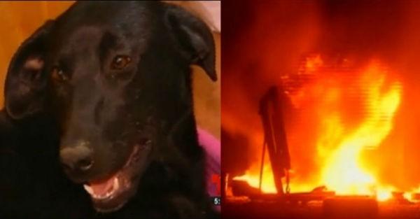 Η αγάπη της μάνας: Δείτε τι έκανε αυτή η σκυλίτσα για να σώσει τα μωρά της από τη φωτιά! (φωτο + βιντεο)