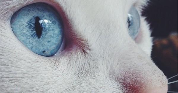 Ματάρες! Δείτε μερικά από τα ομορφότερα μάτια στο ζωικό βασίλειο! (φωτογραφίες)