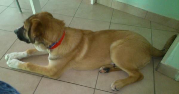O Λεωνίδας, το ομορφότερο σκυλάκι, ψάχνει σπίτι