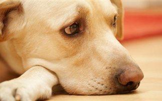 Θεσσαλονίκη: Ημερίδα για την κακοποίηση των ζώων