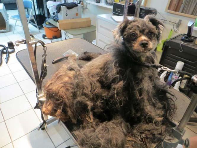 Σκύλος μεταμόρφωση