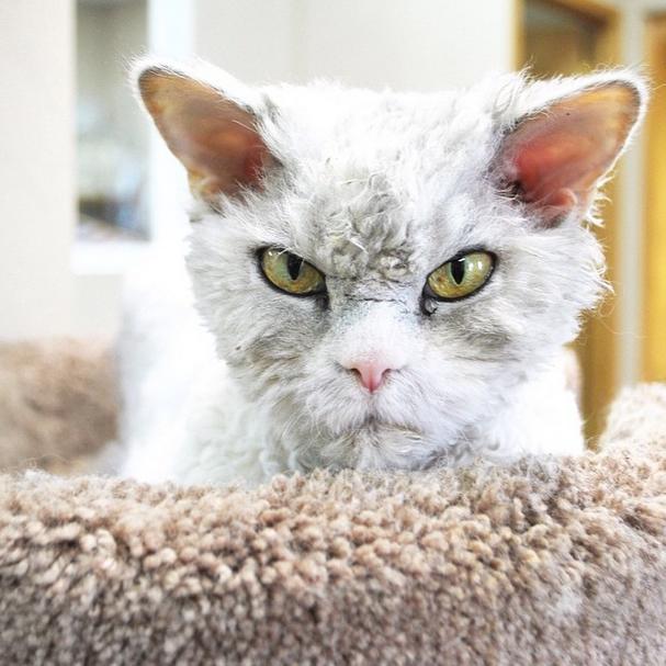Εικόνες Γάτα