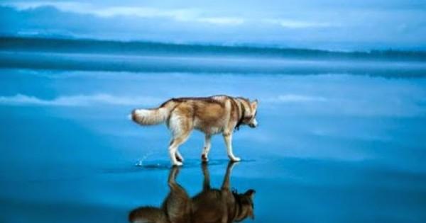 Μαγικές φωτογραφίες από Σιβηρικά Χάσκι πάνω σε λίμνη! Ομορφιά, που σε συγκλονίζει…