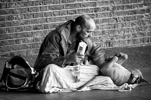 σκύλοι άστεγοι