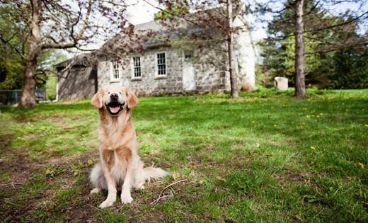 Θα σας κάνει να δακρύσετε και να γελάσετε ταυτόχρονα: Ο σκύλος που γεννήθηκε χωρίς μάτια, μοιάζει σαν να είναι μονίμως γελαστός
