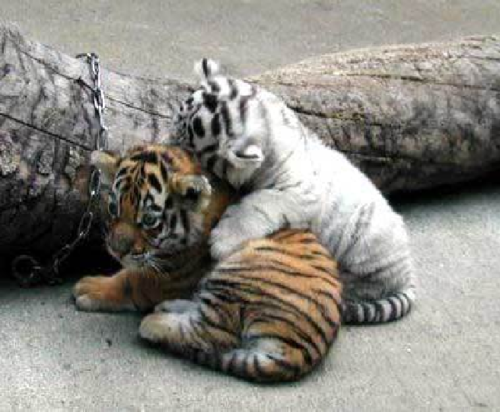 ζώα Εικόνες