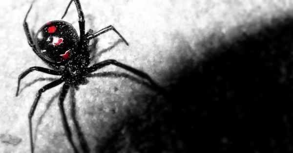 Έχουν οι αράχνες υπερδυνάμεις;