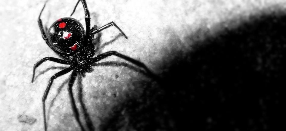 υπερδύναμη αράχνη αράχνες