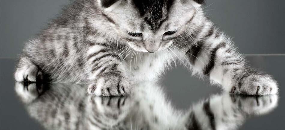 Καθρέφτης Γάτα