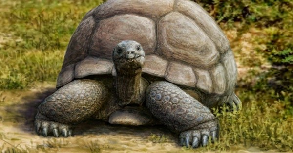 Απολίθωμα χελώνας τριών εκατομμυριων ετών στη Θεσσαλονίκη