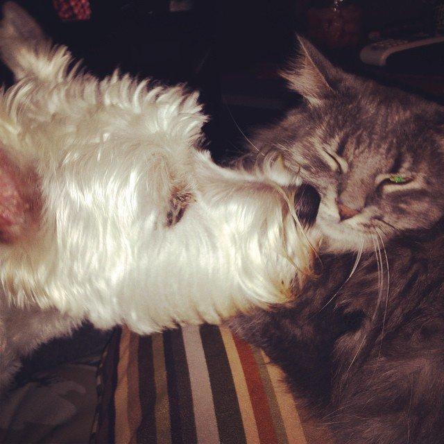 σκύλοι Εικόνες γάτες