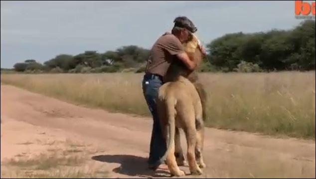 λιοντάρι Βίντεο