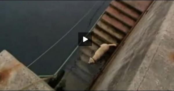 Απίστευτο βίντεο: Ένα Λαμπραντόρ και ένα δελφίνι είναι οι καλύτεροι φίλοι
