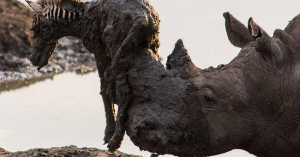 Η ομορφότερη και συνάμα πιο θλιβερή «διάσωση» στην άγρια φύση (εικόνες)