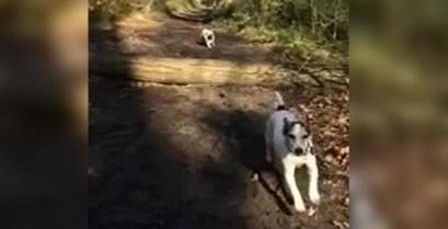 Το περίφημο άλμα του σκύλου (βίντεο)
