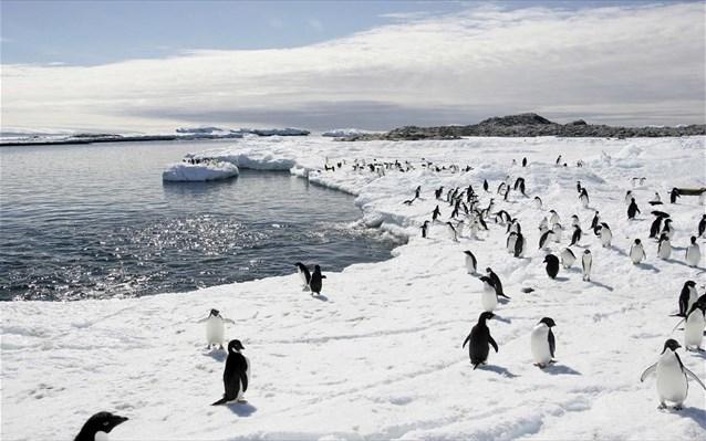 Πιγκουίνοι περπάτημα Βίντεο
