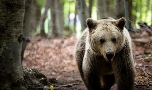 Φλώρινα: Οι αρκούδες… «μύρισαν» άνοιξη και ξύπνησαν από τη χειμερία νάρκη!