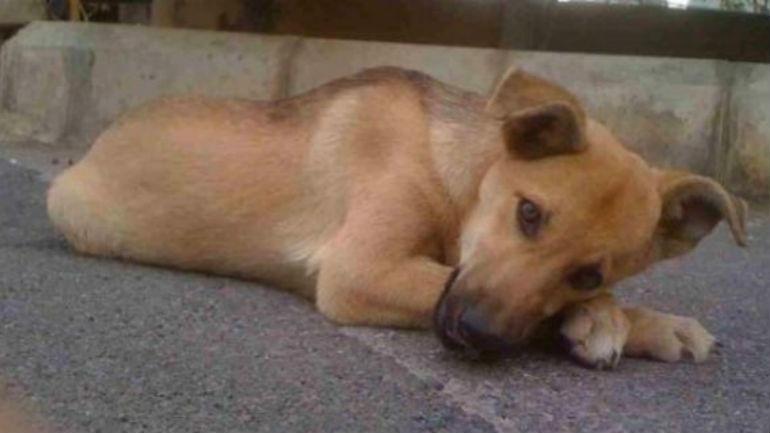 Σκύλος Μυτιλήνη Εγκατάλειψη