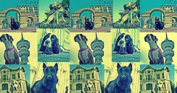 City of dog: Μια διαφορετική έκθεση με φωτογραφίες σκύλων σε διάφορα μνημεία της Θεσσαλονίκης