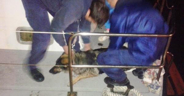 Ναύπλιο: 17 άτομα πάλευαν επί 2.5 ώρες να σώσουν έναν σκύλο
