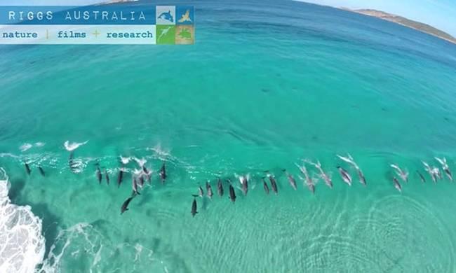 drone-kategrapse-delfinia-pou-serfaroun-panw-se-kymata