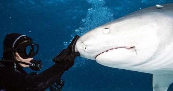 Εντυπωσιακό: Δείτε πώς είναι το εσωτερικό του στόματος ενός καρχαρία (εικόνες)
