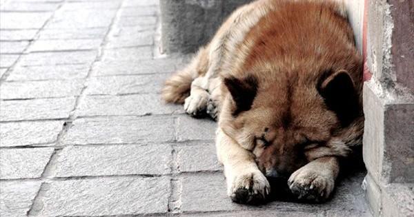 Πώς νιώθει ο σκύλος σου όταν τον εγκαταλείπεις στο δρόμο;