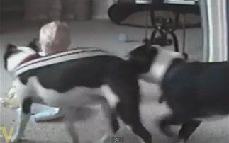 Οι σκύλοι πιο χαριτωμένοι φύλακες των παιδιών (βίντεο)