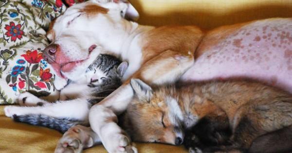 Aσυνήθιστα ζευγάρια ζώων στην αγκαλιά του Μορφέα!
