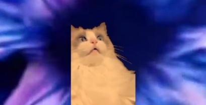 Γάτα βουρτσίζει τα δόντια της (βίντεο)