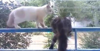 Γνωρίστε τη γάτα… δολοφόνο (βίντεο)