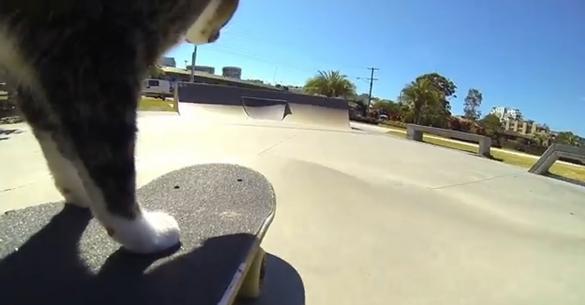 Η γάτα που κάνει skateboard! (βίντεο)
