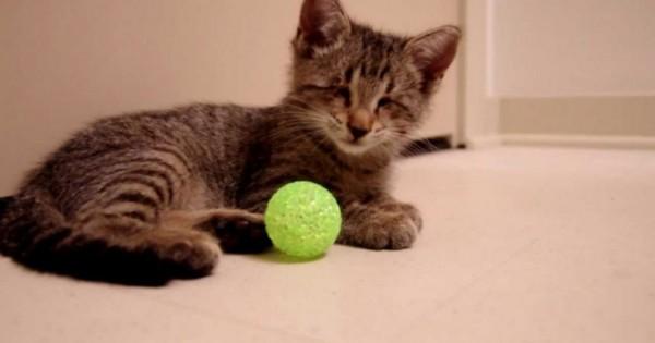 Το πιο γλυκό βίντεο: Τυφλό γατάκι παίζει για πρώτη φορά με τα παιχνίδια του
