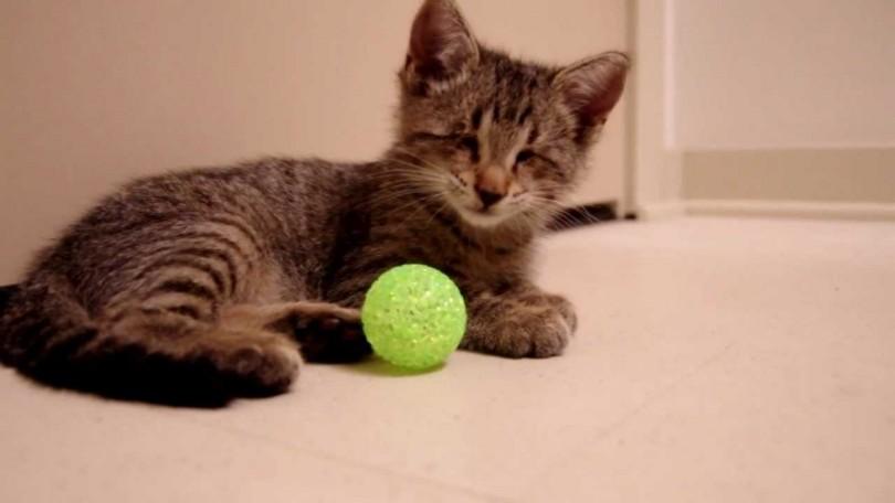 Τυφλό γατάκι Γάτα Βίντεο