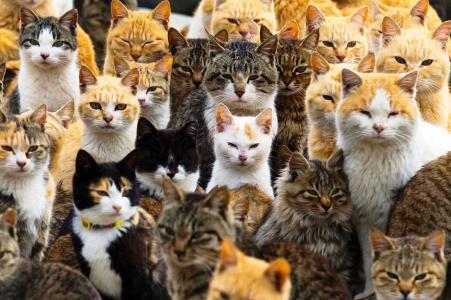 Το νησί που οι αναλογία γατών και ανθρώπων είναι 6 προς 1! (εικόνες,βίντεο)