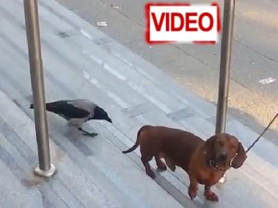 Πουλί και σκύλος: Και κολλητσίδας… και ενοχλητικός!