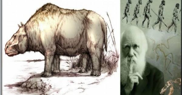 Λύθηκε το μυστήριο των «πιο παράξενων ζώων του κόσμου» που είχε ανακαλύψει ο Δαρβίνος