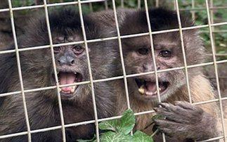 Όταν μια μαϊμού βγαίνει πρώτη φορά ραντεβού (εικόνες)