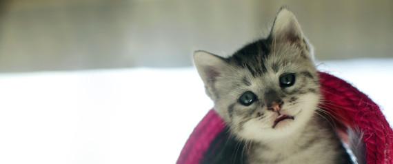 11 λόγοι που οι γάτες μπορούν να μας κάνουν πιο ευτυχισμένους