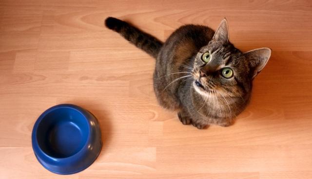 φαγητό Γάτα