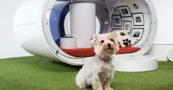 Με 27 χιλιάδες ευρώ ο σκύλος σου έχει σπίτι με υδρομασάζ (vds + photos)