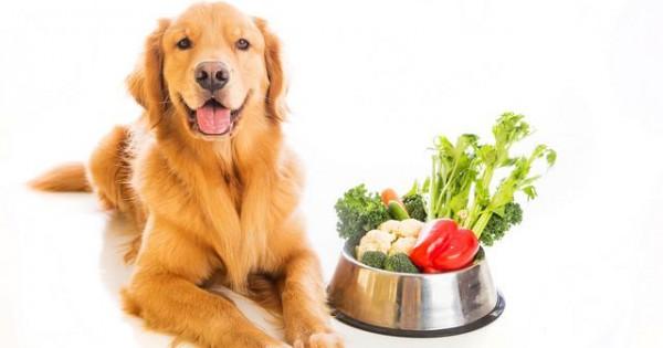 Ποια φρούτα και λαχανικά επιτέπεται να τρώει ο σκύλος σας