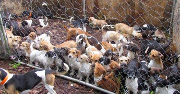 Ασύλληπτο: Ζούσε με 85 ζωντανά και 65 πεθαμένα σκυλιά!