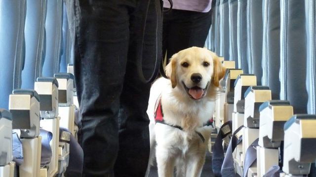 ταξίδι Σκύλος αεροπορικώς