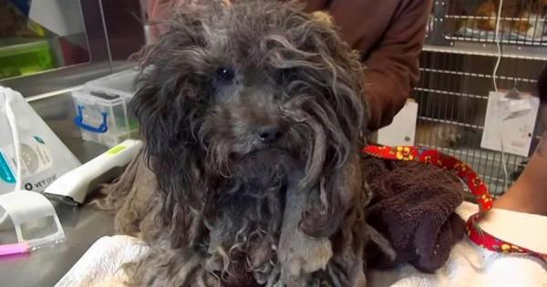Η διάσωση και μεταμόρφωση ενός αδέσποτου σκύλου (photos)