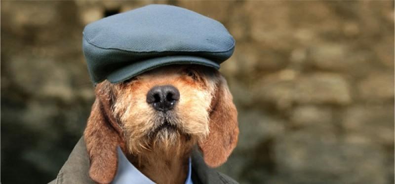 υπερήλικας σκύλος Σκύλος