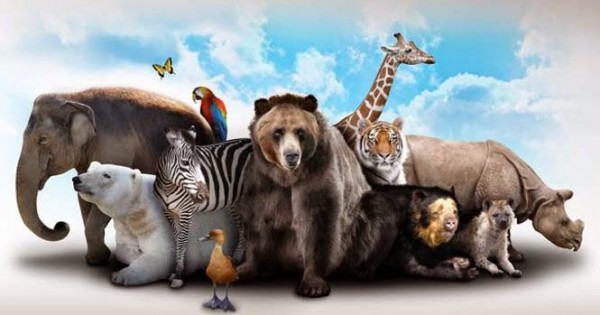 Τα 10 πιο δυνατά ζώα στον πλανήτη