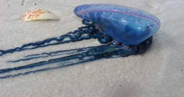 Τα 7 πιο περίεργα πλάσματα που θα συναντήσει κανείς στους ωκεανούς (εικόνες)