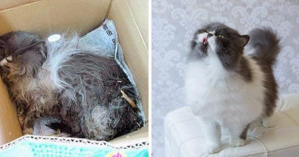 Απίστευτες εικόνες με γατάκια πριν και μετά τη διάσωση!