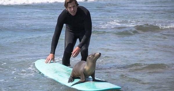 Surf παρέα με μια μικρή φώκια (photos)!
